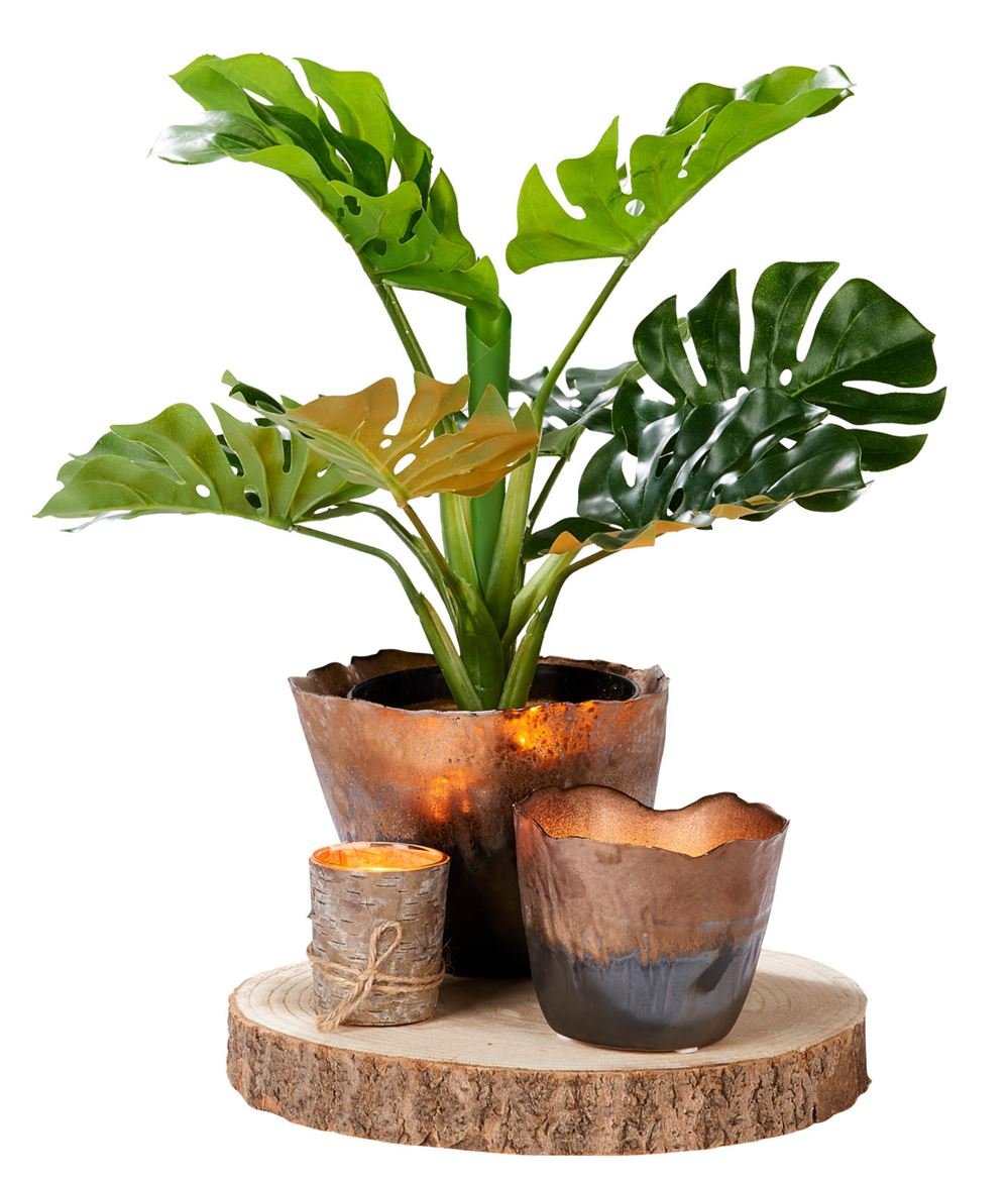 Tropical plante en pot produits feelgood pour la maison for Plante hivernale en pot