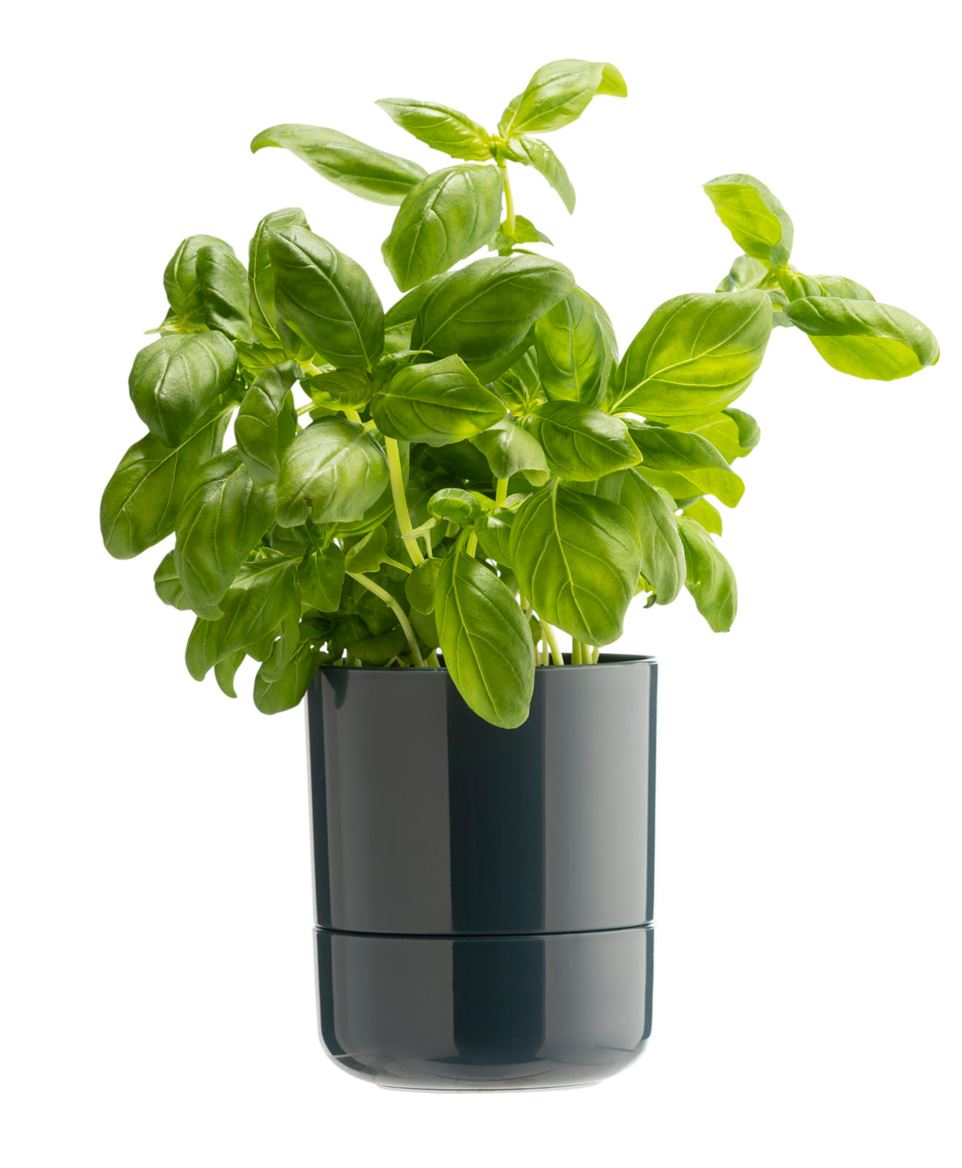HERBO Pot à fines herbes auto-irriguant 4 couleurs diverses couleurs_herbo-pot-à-fines-herbes-auto-irriguant-4-couleurs-diverses-couleurs