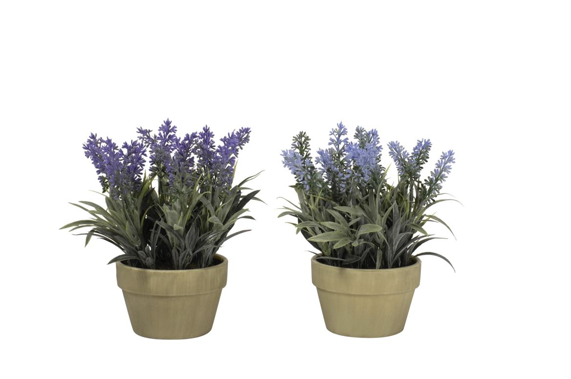 lavender plante en pot lavande produits feelgood pour la maison et le jardin chez casa. Black Bedroom Furniture Sets. Home Design Ideas